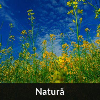 Fotografie în natura