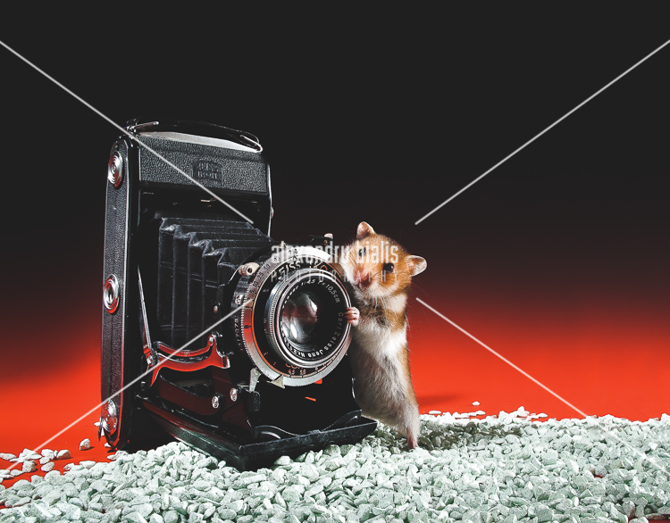 personal-work-Soricelul fotograf