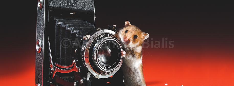 Soricelul-fotograf-PREVIEW-slider-shop